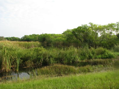 Filter Marsh Functional Assessment Method